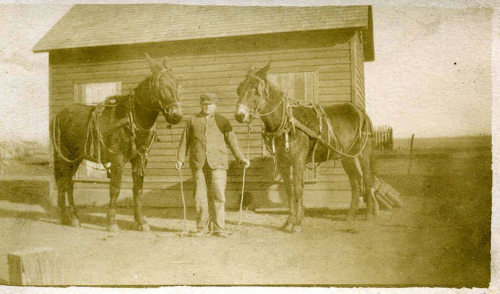 Warner Jones and his favorite team of mules