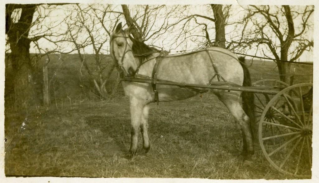 Constantine 'Tom' Breneman's Buggy Horse